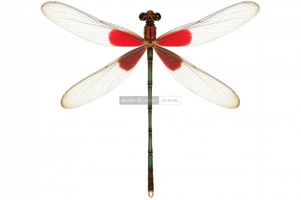 AudioQuest DragonFly Red logo